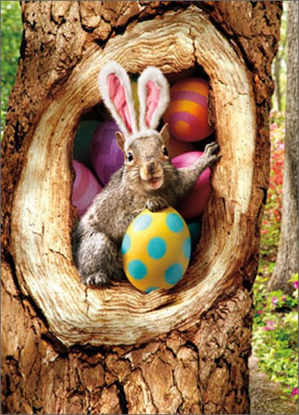Squirrel In Tree With Easter Eggs (1 card/1 envelope) Avanti Funny Easter Card  INSIDE: Me and the Bunny are tight! Happy Easter