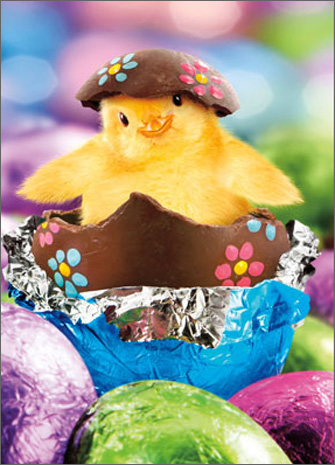 Chick In Foil Wrapped Egg (1 card/1 envelope) Avanti Funny Easter Card  INSIDE: Chicks love chocolate! happy easter