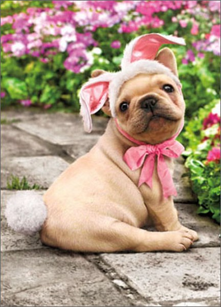 Dog With Bunny Tail (1 card/1 envelope) Avanti Funny Easter Card  INSIDE: There's no bunny sweeter than you! Happy Easter