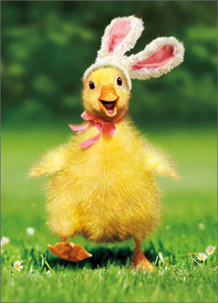Duckling Bunny (1 card/1 envelope) Avanti Funny Easter Card  INSIDE: Happy Easter!