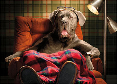 Lazy Dog In Recliner (1 card/1 envelope) Avanti Funny Father's Day Card  INSIDE: Put your feet up Dad, you earned it! Happy Father's Day