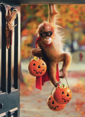 Orangutan Jack-O-Lanterns (1 card/1 envelope) Avanti Funny Halloween Card  INSIDE: Monkey See, Monkey Boo!! Happy Halloween