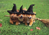 3 Dogs With Witches Broom (1 card/1 envelope) - Halloween Card  INSIDE: You get three witches this year! Happy Halloween