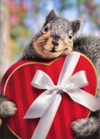 Squirrel Holds Heart Box Standout (1 card/1 envelope) Avanti Stand Out Pop Up Funny Valentine's Day Card