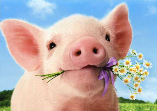 Pig Holds Flowers Standout 1 card1 envelope Avanti Stand Out – Pig Valentine Cards