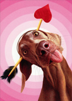 Dog With Arrow Through Head (1 card/1 envelope) Avanti Funny Valentine's Day Card