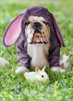 Dog In Bunny Suit (1 card/1 envelope) - Easter Card  INSIDE: Hoppy Easter