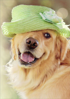 Golden Retriever Green Hat (1 card/1 envelope) Avanti Dog Mother's Day Card