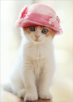 Cat Wears Pillbox Hat (1 card/1 envelope) Avanti Mother's Day Card