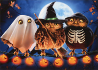 Halloween Owls (1 card/1 envelope) - Halloween Card  INSIDE: Hoot Hoot Hoot! Happy Halloween