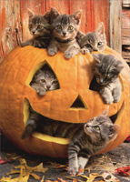 Kittens In Jack O Lantern (1 card/1 envelope) Avanti Cat Halloween Card
