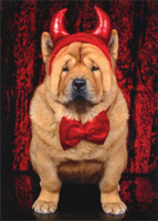 Devil Chow Dog (1 card/1 envelope) - Halloween Card  INSIDE: Is it getting hot in here, or is it just me? Happy Halloween!