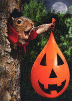 Vampire Squirrel Water Balloon (1 card/1 envelope) - Halloween Card  INSIDE: I like the treats, but I love the tricks! Happy Halloween