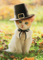 Pilgrim Cat (1 card/1 envelope) Avanti Kitten Thanksgiving Card