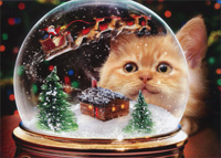 Kitten Snow Globe (1 card/1 envelope) - Christmas Card  INSIDE: Hope your holidays are magical! Merry Christmas