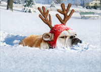 Bulldog Reindeer (1 card/1 envelope) - Christmas Card  INSIDE: Dashing through the snow � Merry Christmas!