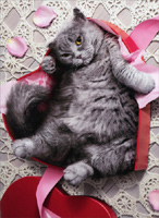 Cat Inside Heart Shaped Box (1 card/1 envelope) Avanti Stand Out Pop Up Funny Valentine's Day Card