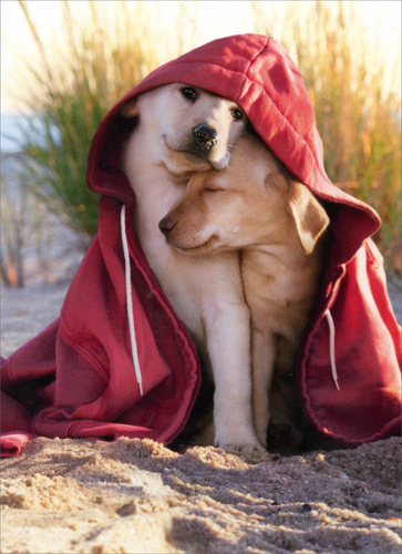 dogs in hoodie dog valentines day card
