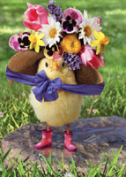 Baby Chick Big Bonnet (1 card/1 envelope) Avanti Easter Card
