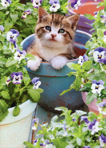 kitten in flower pot cat mother u0026 39 s day card by avanti press