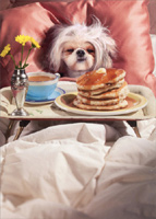 Breakfast In Bed (1 card/1 envelope) Avanti Dog Mother's Day Card