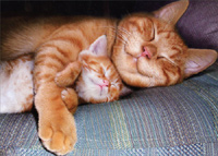 Napping Mom Cat & Kitten (1 card/1 envelope) - Mother's Day Card  INSIDE: There's one place where everything is perfect! Happy Mother's Day