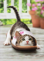 Kitten In Shoe (1 card/1 envelope) - Mother's Day Card  INSIDE: Thanks for helping me out of the tight spots! Happy Mother's Day