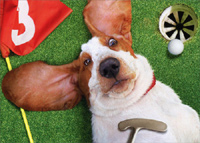 Basset On Back on Golf Green (1 card/1 envelope) Avanti Funny Dog Father's Day Card