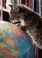 Kitten On Globe (1 card/1 envelope) - Graduation Card  INSIDE: Look out world! Congratulations