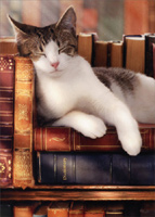 Sleeping Cat On Stack Of Books (1 card/1 envelope) - Graduation Card  INSIDE: Another chapter completed! Congratulations