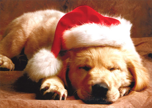 Puppy with Hat (1 card/1 envelope) - Christmas Card - FRONT: No Text  INSIDE: Have a Merry Little Christmas!