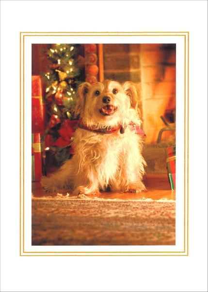 Mixed Breed Portrait (1 card/1 envelope) - Holiday Card - FRONT: No Text  INSIDE: Warmest wishes for a very Happy Holiday!