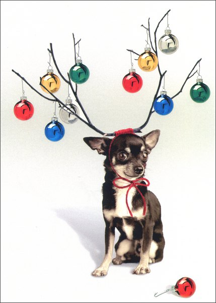 Little Dog/Big Antlers (1 card/1 envelope) Christmas Card - FRONT: No Text  INSIDE: it's tinsel time! Merry Christmas