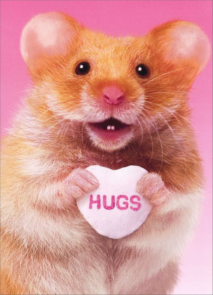 Hamster Hug (1 card/1 envelope) Funny Valentine's Day Card - FRONT: Hugs  INSIDE: and kisses! Happy Valentine's Day