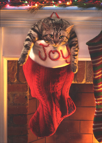 Fat Cat in Stocking (1 card/1 envelope) Christmas Card - FRONT: No text  INSIDE: May your stocking runneth over!  Merry Christmas