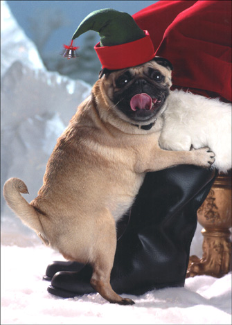 Elf Dog Loving Santa's Leg (10 cards & 12 envelopes) - Boxed Christmas Cards - FRONT: No text  INSIDE: Santa, you gotta love him!  Happy Holidays