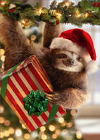 Cute Santa Sloth Holding Gift While Hanging from Holly Christmas Card