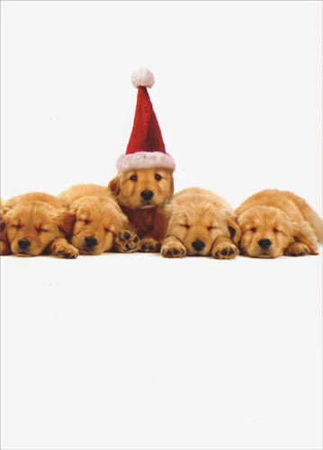 Line of Pups & Santa Hat (1 card/1 envelope) Avanti Dog Christmas Card - FRONT: No Text  INSIDE: The holidays bring us all a little closer! Merry Christmas