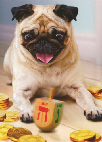 Pug with Dreidel (10 cards/10 envelopes) Avanti Dog Boxed Hanukkah Cards - FRONT: No Text  INSIDE: Any way you spin it.. have a Happy Hanukkah!