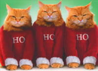 Ho Ho Ho Cats Christmas Card