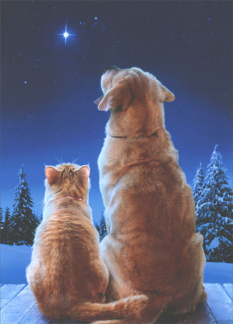 Cat & Dog Star (10 cards & 12 envelopes) Avanti Boxed Christmas Cards - FRONT: No Text  INSIDE: May the miracle of Christmas fill your heart with joy!