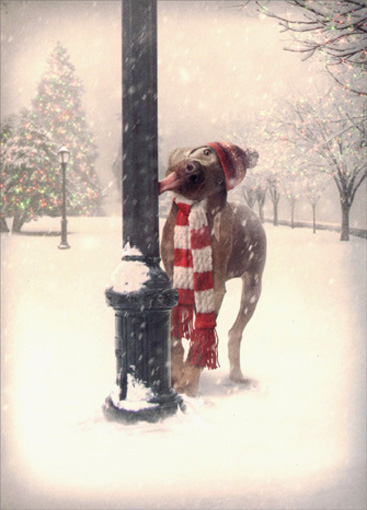 Dog Tongue Stuck on Pole (10 cards & 12 envelopes) Avanti Funny Boxed Christmas Cards - FRONT: No Text  INSIDE: Merwwy Chwithmuth!