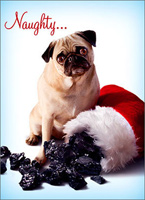 Dog With Stocking Of Coal Christmas Card