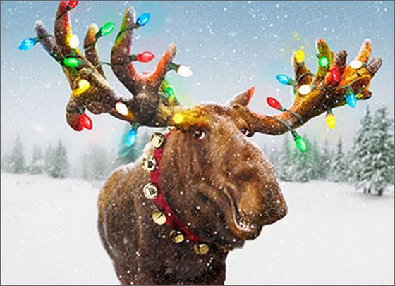 Decorated Moose Antlers (1 card/1 envelope) - Christmas Card  INSIDE: Merry Christmoose!