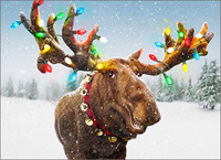 Decorated Moose Antlers Box of 10 Christmas Cards