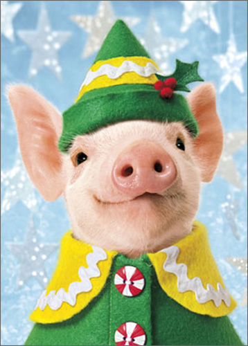Pig Elf (1 card/1 envelope) Avanti Funny Christmas Card  INSIDE: Wishing you the Merriest little Christmas ever!