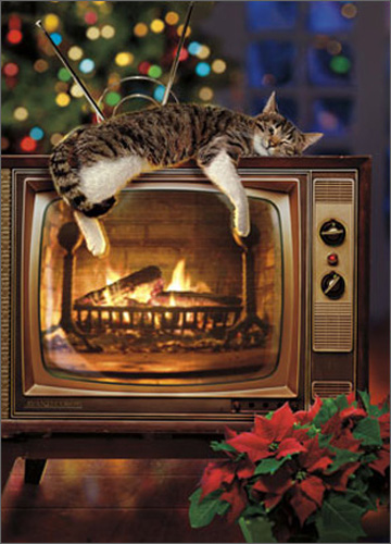 Cat On Yule Log TV (1 card/1 envelope) Avanti Funny Christmas Card  INSIDE: Warm wishes for a cozy Christmas!