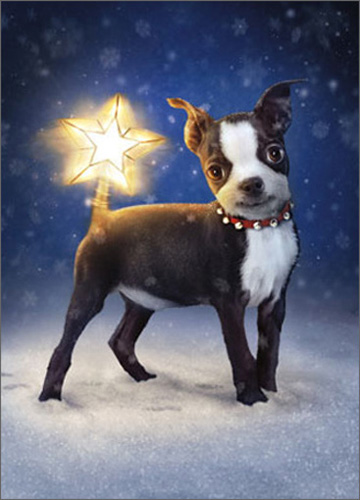 Dog With Star Topper Tail (10 cards/12 envelopes) Avanti Funny Boston Terrier Boxed Christmas Cards  INSIDE: May your Christmas be merry and bright!