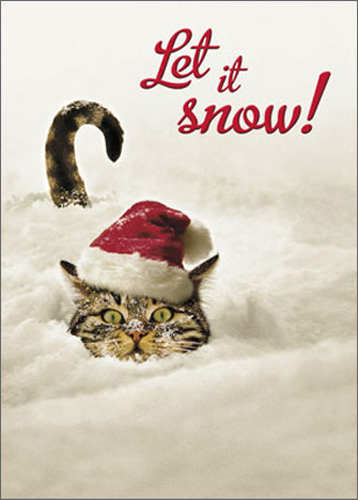 Cat In Snow (1 card/1 envelope) Avanti Funny Christmas Card - FRONT: Let it snow!  INSIDE: Let it snow! Let it snow! Merry Christmas