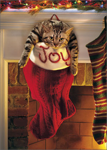Fat Cat In Stocking (10 cards/12 envelopes) Avanti Funny Boxed Christmas Cards  INSIDE: May your stocking runneth over! Merry Christmas